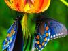 Mostra 'Universo delle Farfalle viventi'