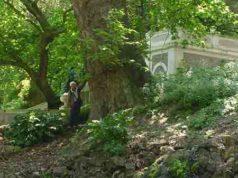 Platano orientale orto botanico di Roma
