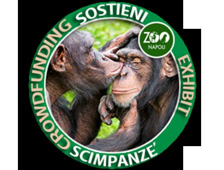 Exibit Scimpanzé