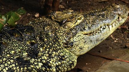 Coccodrillo Zoo di Napoli, foto di Antonio Musa