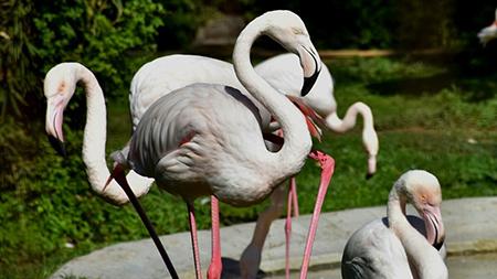 Fenicotteri Zoo di Napoli, foto di Antonio Musa