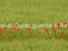 'Castel di Guido guarda al futuro'