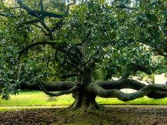 giornata-nazionale-degli-alberi