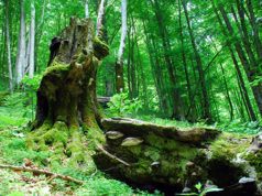 forestazione