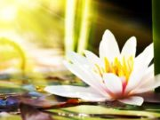 Il fiore di Dio