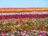 Polo mercatale fiori