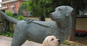 Scuola nazionale cani guida per ciechi