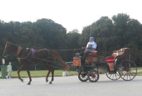 Trasporto ippotrainatonel Parco della Reggia di Caserta