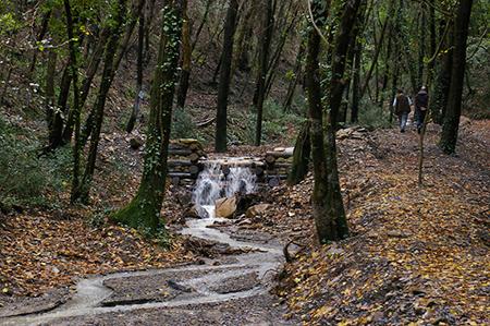 Foresta Toscana