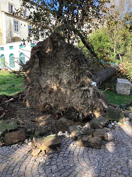 Bosco Capodimonte alberi caduti