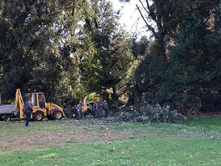 Bosco Capodimonte operai lavori alberi caduti