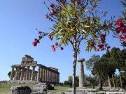 Tempio di Cerere a Paestum (SA)