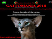 'Gattomania 2018' Premio Speciale ''O' Sarracino'