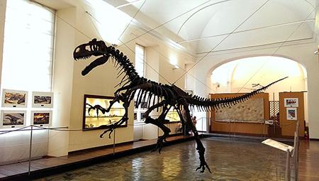 Museo di paleontologia di Napoli Allosauro