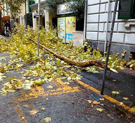 Napoli albero caduto