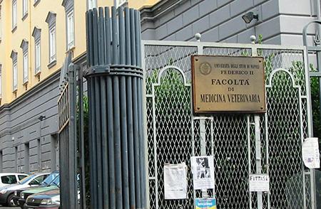 Facoltà di Medicina Veterinaria Università Federico II di Napoli