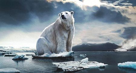 Orso ghiacciai