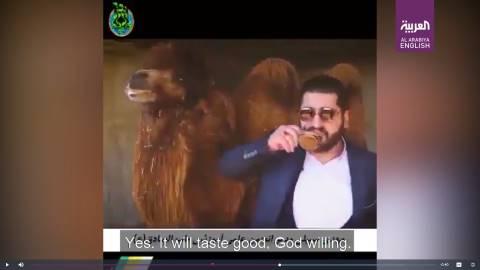 medico Iran urina cammello