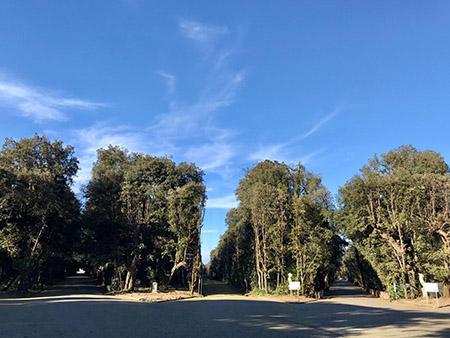 Bosco di Capodimonte - Emiciclo Porta di Mezzo architettura_vegetale tardo Barocco