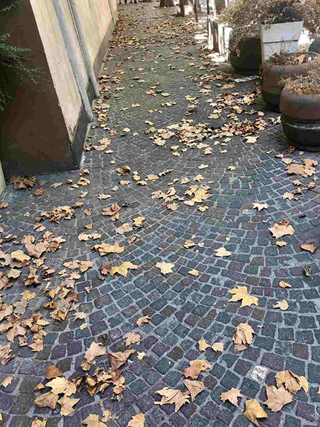 Napoli, via Cimarosa, foglie cadute prematuramente