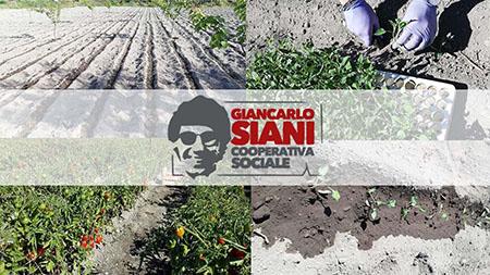 Cooperativa sociale Giancarlo Siani