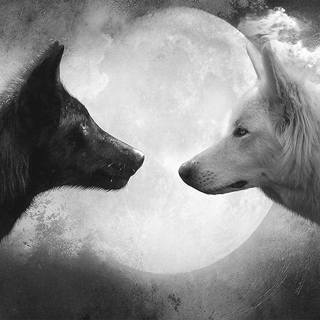 Lupo nero e lupo bianco