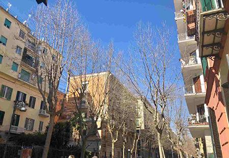 Napoli, via Luca Giordano, alberi non potati