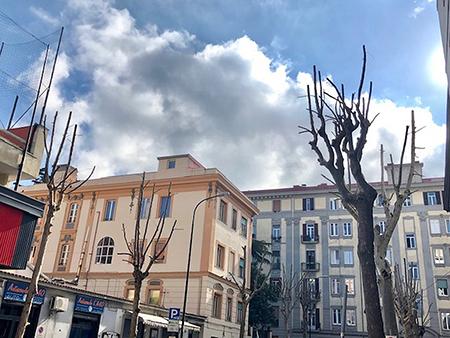 Napoli, via Morghen, alberi potati