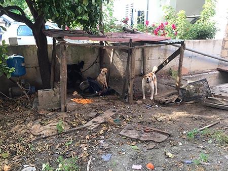 Cani sequestrati