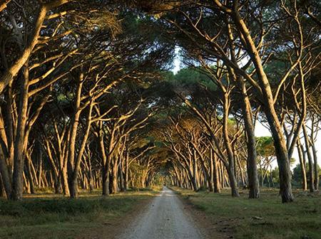 Parco San Rossore Migliarino Massaciuccoli