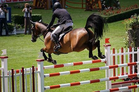 Cavallo - foto di repertorio Pixabay